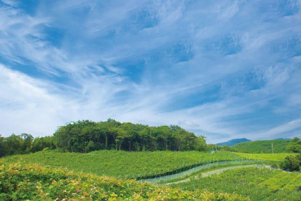 広域なぶどう畑に自動散水システムを導入するため、屋外使用できるWi-Fiを探していた