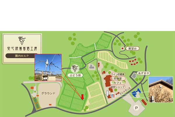 安心院葡萄酒工房 園内マップ